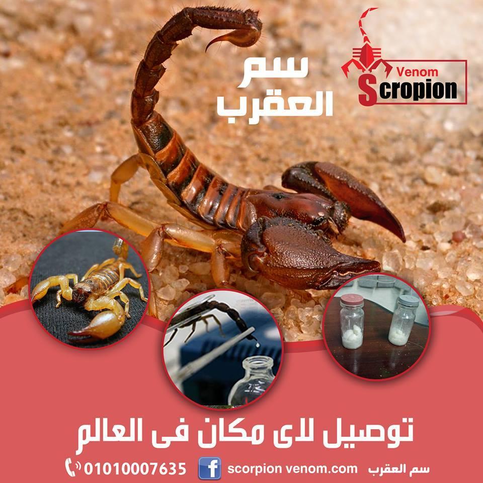 Scorpion venom سم  العقارب P_91910a351